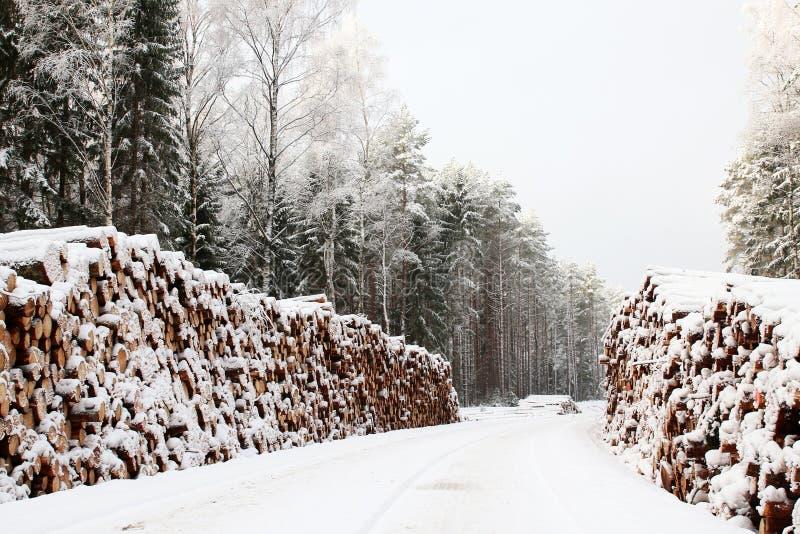 De madeira entra a neve do inverno, fundo da floresta fotos de stock royalty free