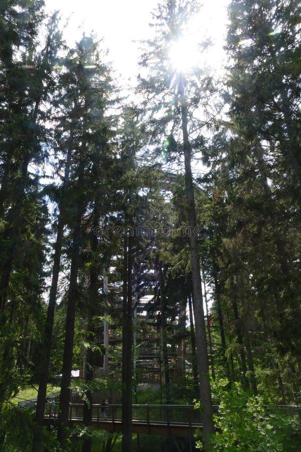 De madera mire hacia fuera la torre en bosque profundo foto de archivo