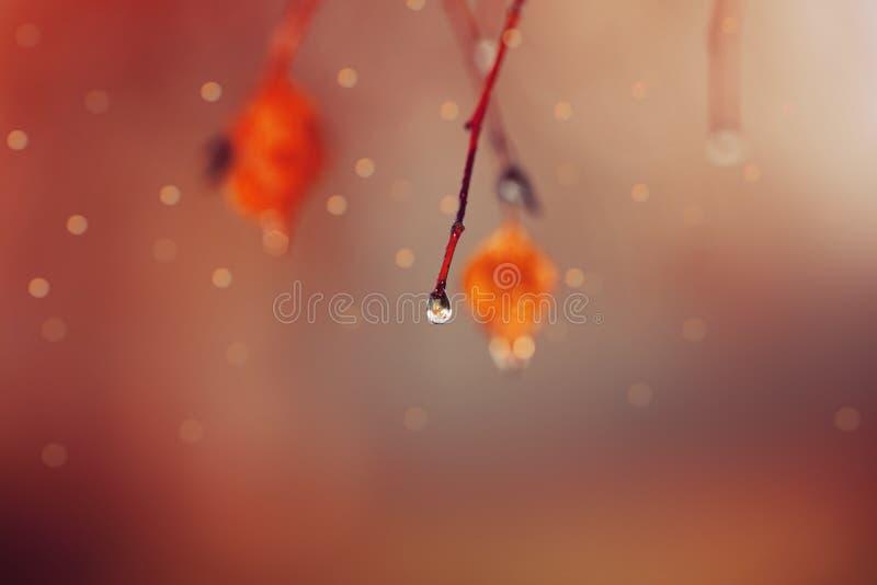 De magische Herfst een daling van water op een takdauw bokeh royalty-vrije stock afbeeldingen