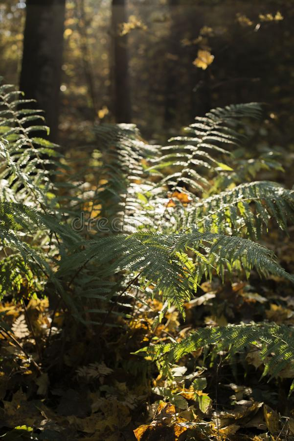 De magische herfst in het bos stock fotografie