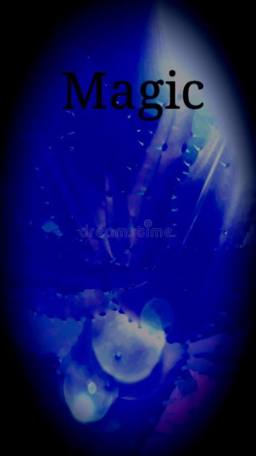 De magische kruidige installatie van aloëvera stock fotografie