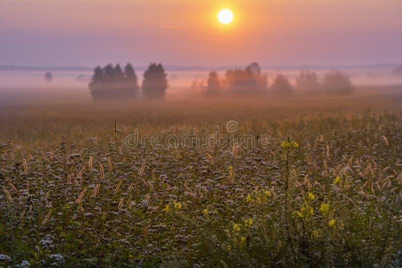 De magische lente, de zomer nevelige ochtend royalty-vrije stock fotografie