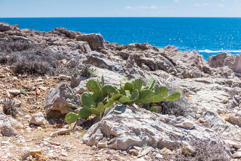 5 de maio de 2019, Dubrovnik, Croácia Ilha de Locrum fotografia de stock