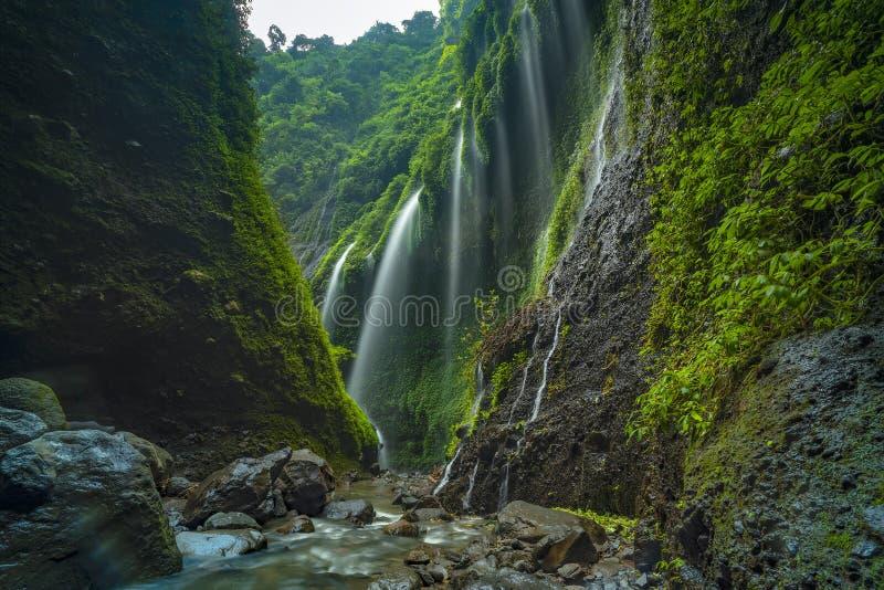 De majestueuze Madakaripura-waterval in Oost-Java, Indonesië royalty-vrije stock foto's