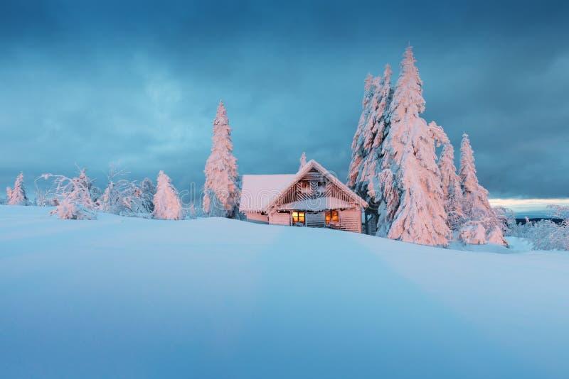 De majestueuze witte sparren die met het zonlicht glanzen Gloeiend huis in zonsonderganglicht De tijd van Kerstmis royalty-vrije stock afbeelding