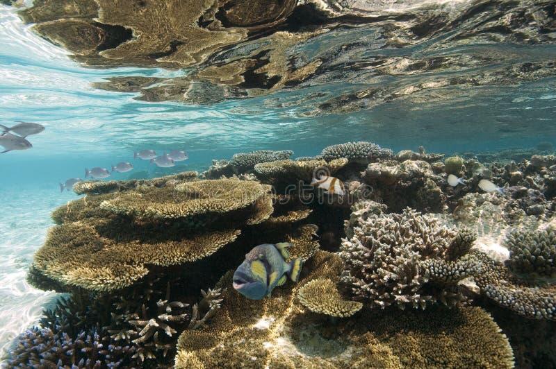 De Maldiven - Koraalrif stock afbeelding