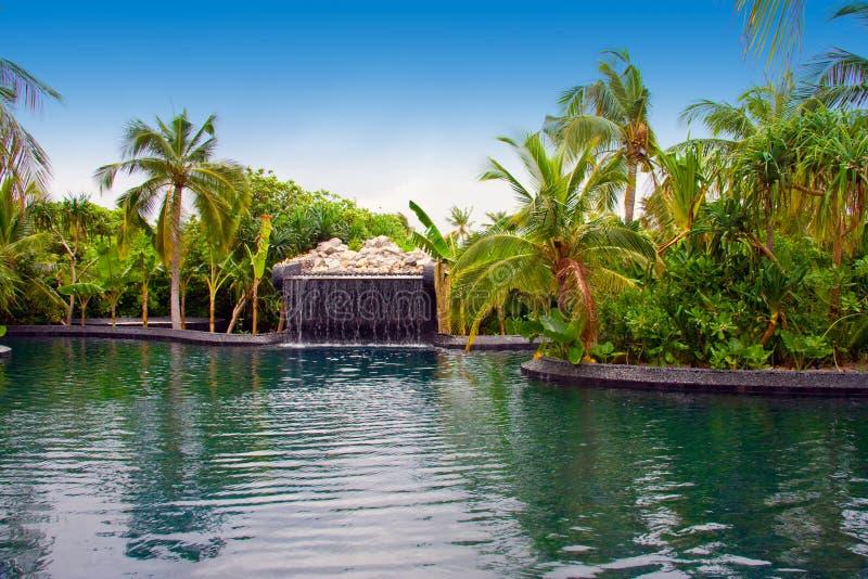 De Maldiven. Pool met kleine daling van tropische tuin stock fotografie