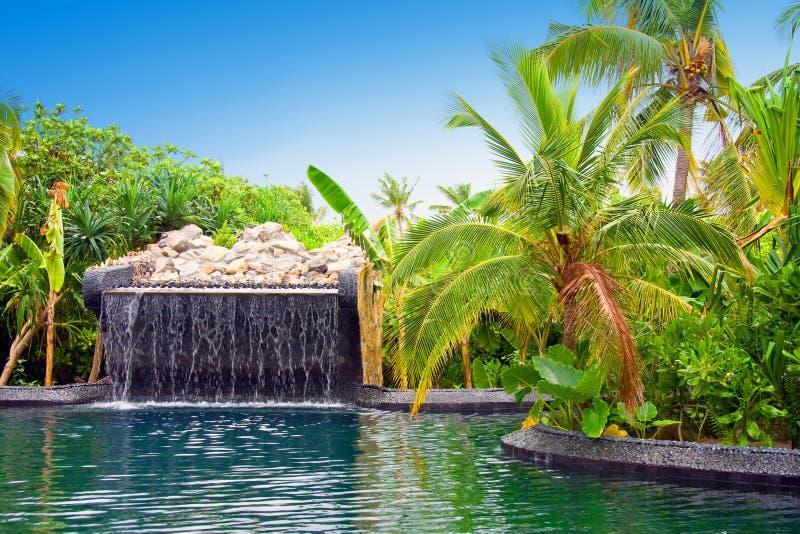 De Maldiven. Pool met kleine daling van tropische tuin stock foto's