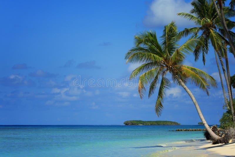 De Maldiven: Tropisch eiland royalty-vrije stock foto's