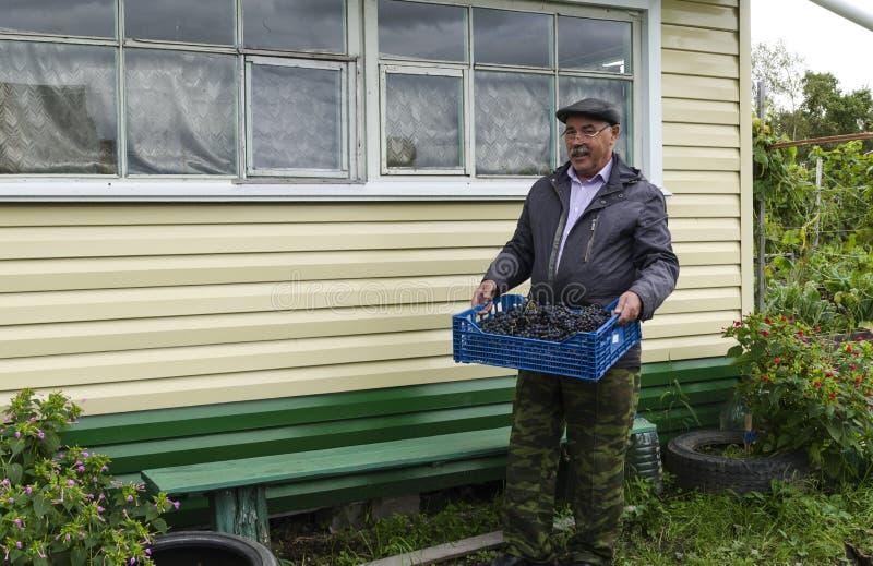 De man in het land met een mand van druiven stock foto's