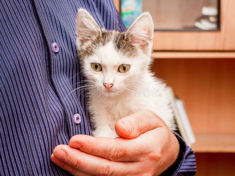 De man houdt op zijn handen een klein wit bevlekt katje met grote expressieve ogen stock afbeeldingen