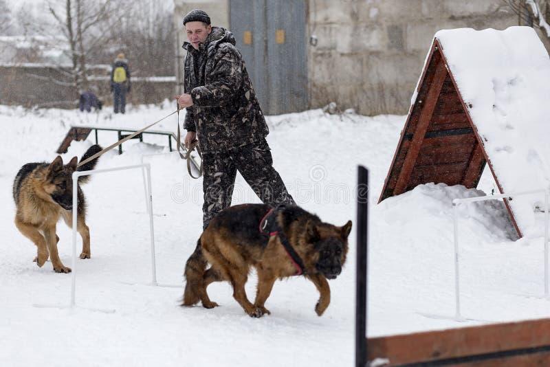 De man leidt Duitse herders, in de winter op royalty-vrije stock afbeeldingen