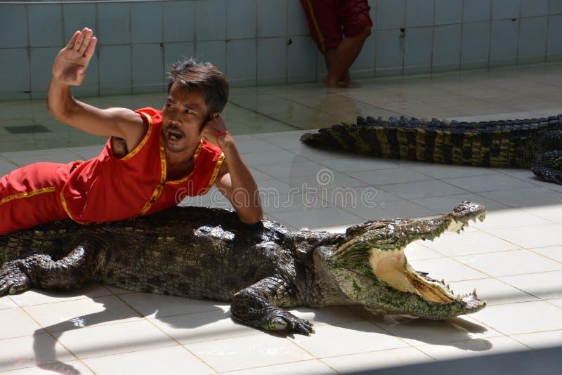 De man ligt op de krokodil De krokodil toont bij Phuket-dierentuin, Thailand - December 2015: de krokodil toont bij krokodillandb stock fotografie
