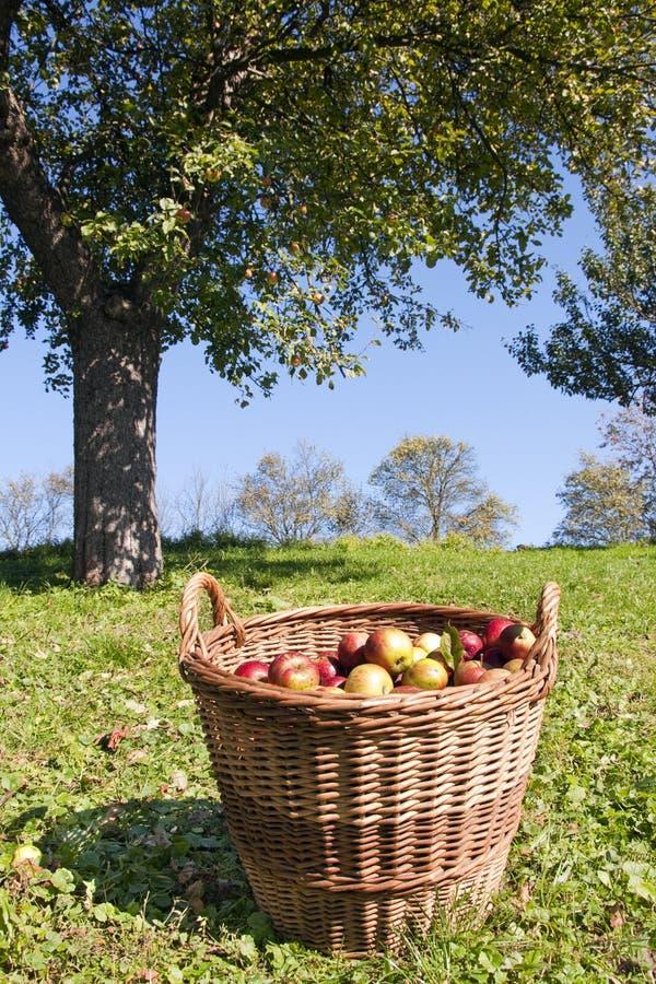 De mand van de appel stock afbeeldingen