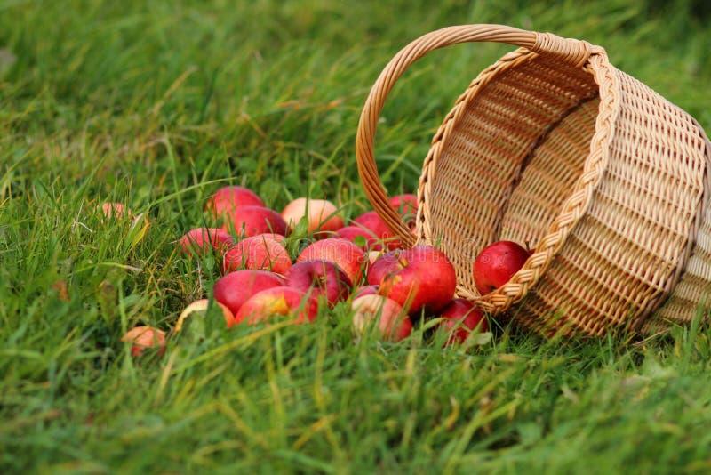 De mand van de appel royalty-vrije stock afbeelding