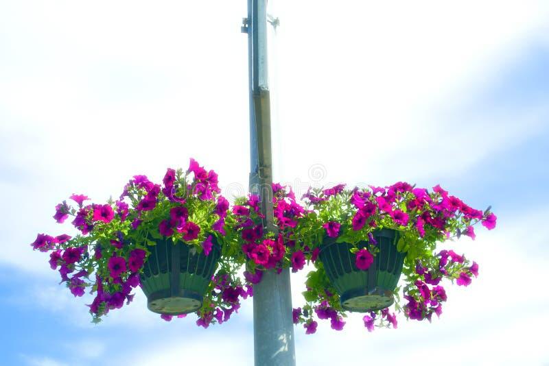 De mand van de bloem op een post stock foto