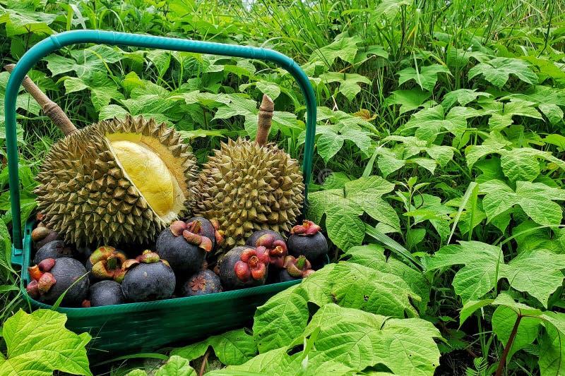 De mand van fruitgiften, met inbegrip van durian en mangostan stock foto's