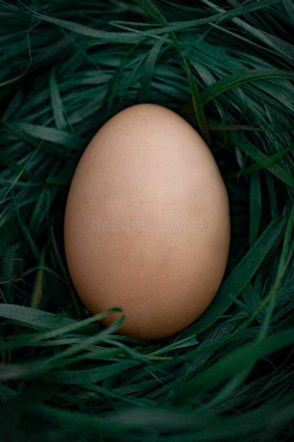 De mand van kippeneieren op hey royalty-vrije stock foto