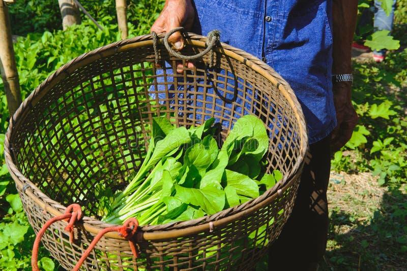 de mand van de landbouwersholding met verse groenteopbrengst van tuinlandbouwbedrijf royalty-vrije stock foto