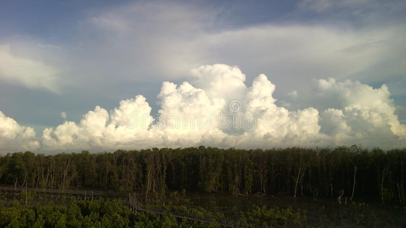 De mangrove bos en houten brug van de hemel witte wolk royalty-vrije stock foto