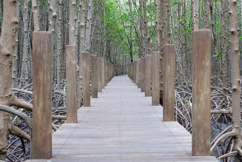 De mangrove van Thailand stock afbeelding