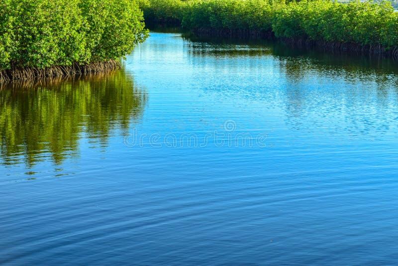 De Mangroven stock fotografie