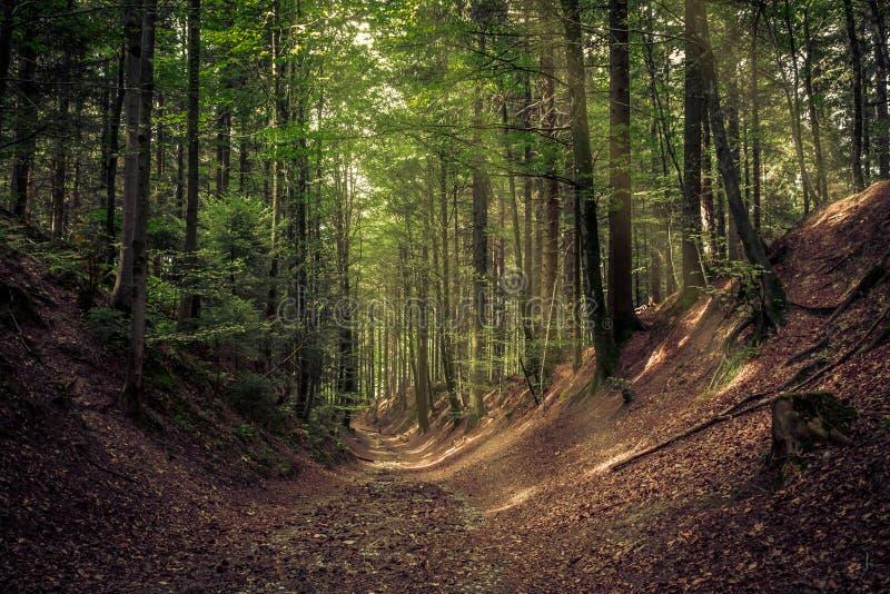 De manier in bos stock fotografie
