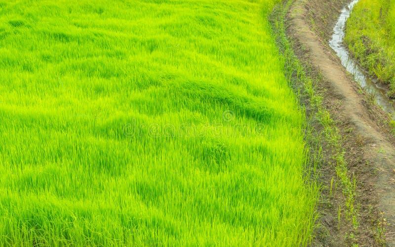 De manier in groen landbouwbedrijf, platteland van Thailand stock afbeelding