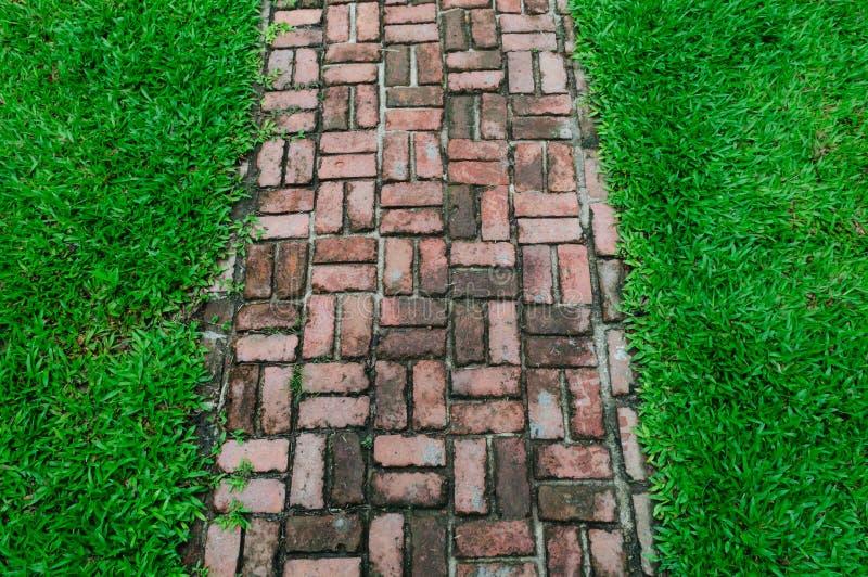 De manier van de baksteengang op de groene gebiedsachtergrond stock foto's