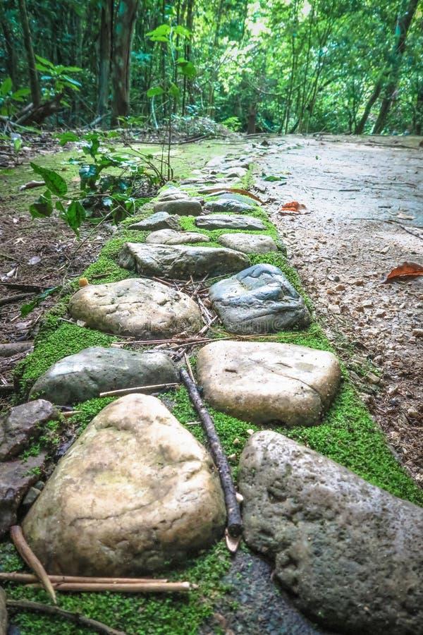 De manier van de steengang in het bos royalty-vrije stock foto's