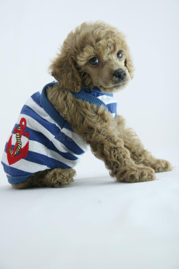 De manier van het puppy stock afbeelding