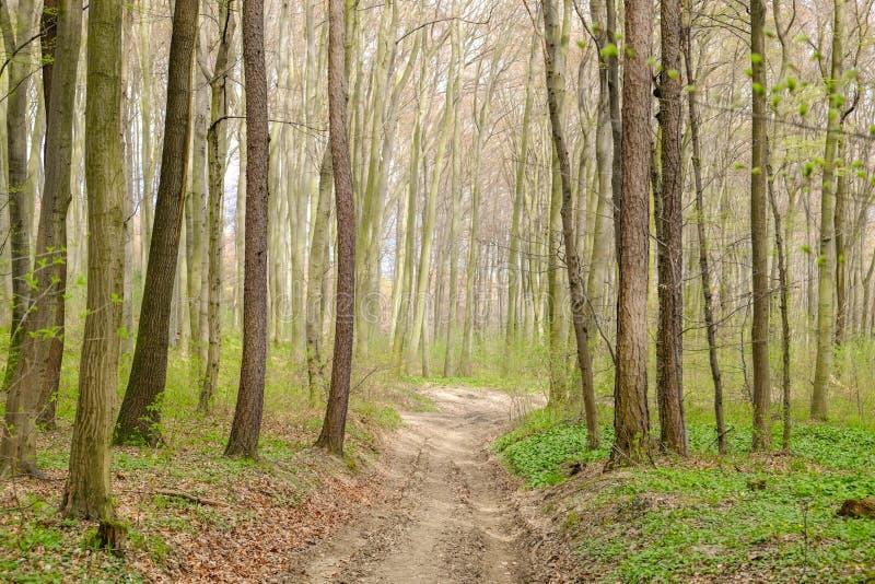 De manier werpt het bos royalty-vrije stock foto