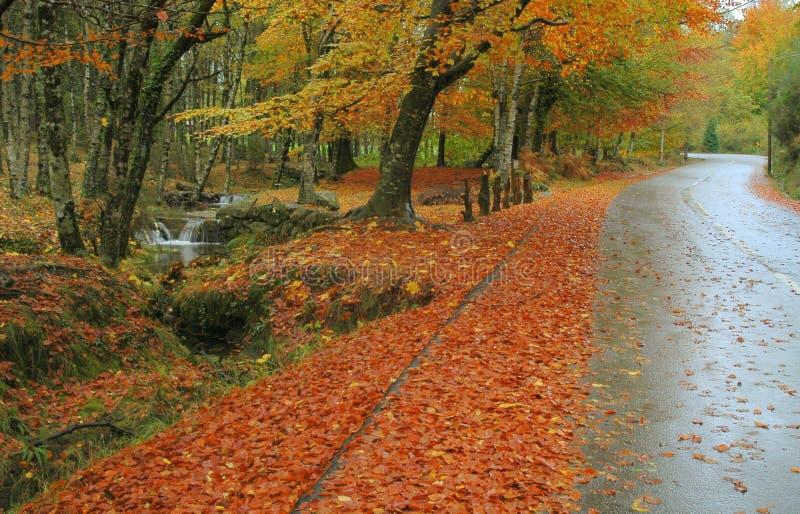 De manieren van de herfst stock afbeeldingen