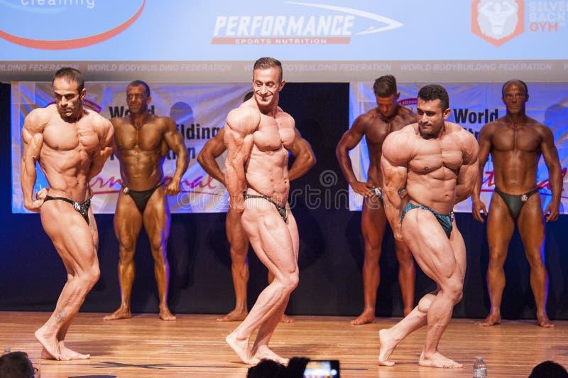 De mannelijke bodybuilders buigen hun spieren om hun lichaamsbouw te tonen stock afbeeldingen