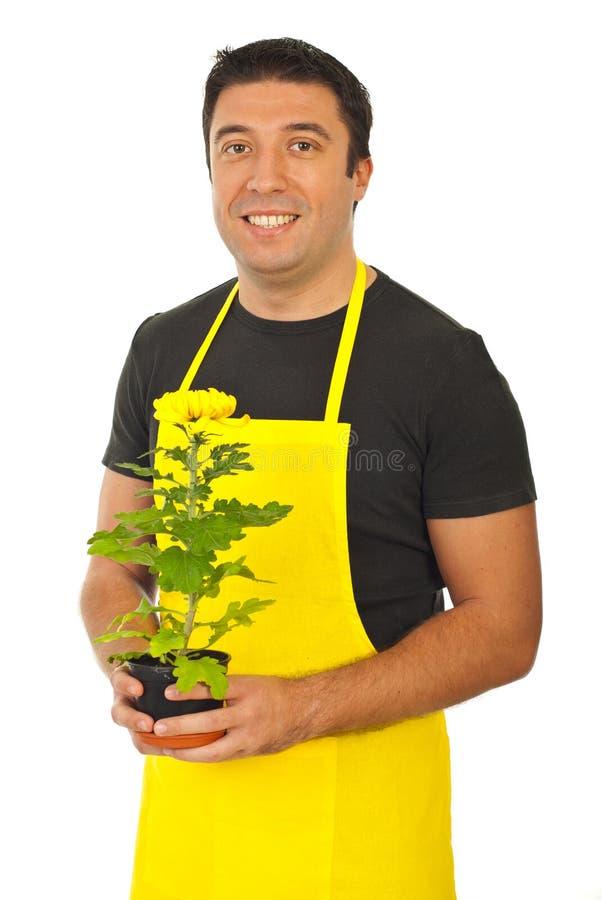 De mannelijke chrysant van de tuinmanholding royalty-vrije stock fotografie