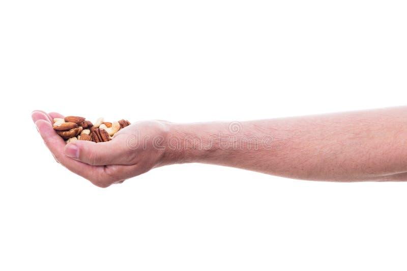 De mannelijke hand houdt diverse noten stock afbeelding