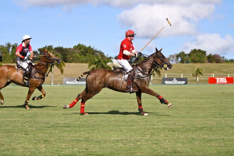 De mannelijke Speler van het Polo stock afbeelding