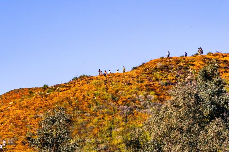 16 de março de 2019 lago Elsinore/CA/EUA - povos que visitam a área de Walker Canyon durante o superbloom; Papoilas de Califórnia fotografia de stock royalty free