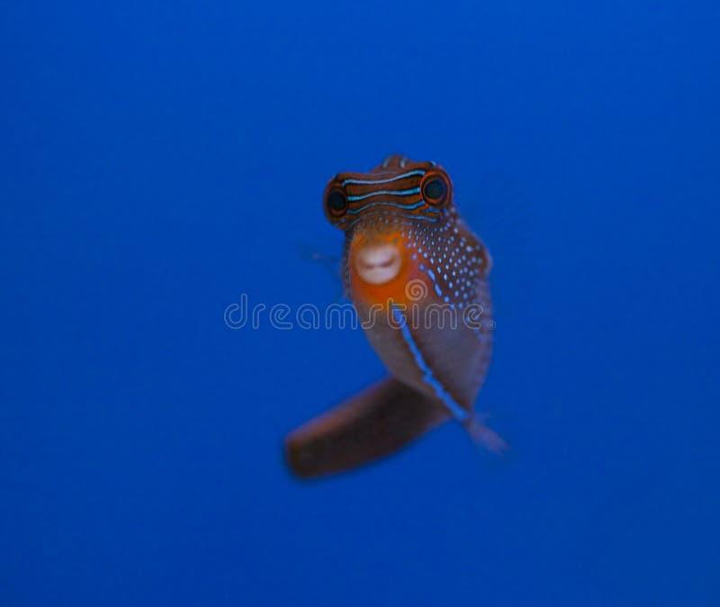 De mariene tank van aquariumvissen stock fotografie