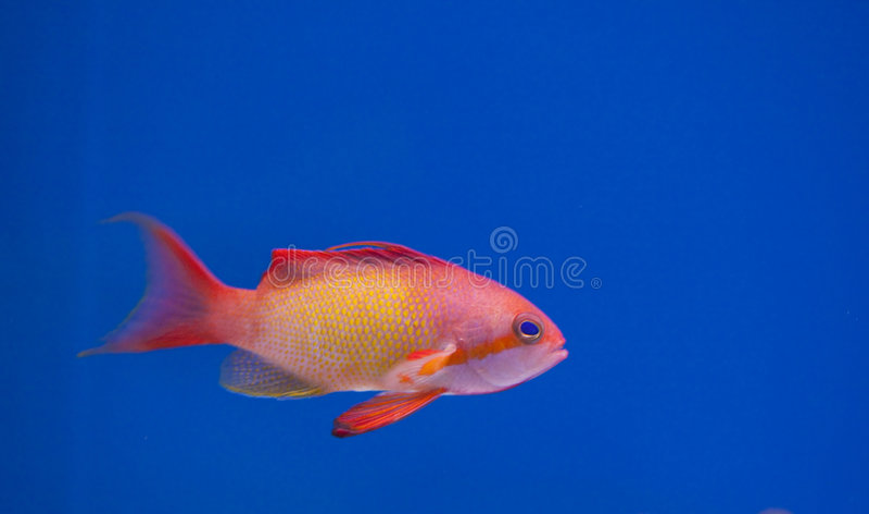 De mariene tank van aquariumvissen royalty-vrije stock afbeelding