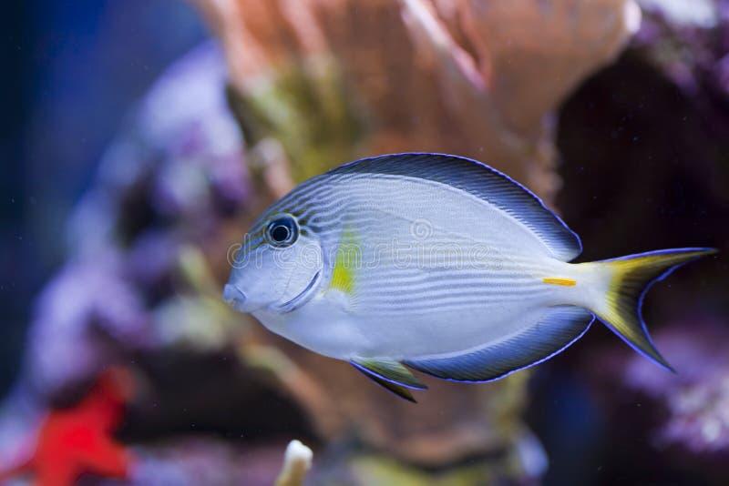 De mariene tank van aquariumvissen stock afbeeldingen
