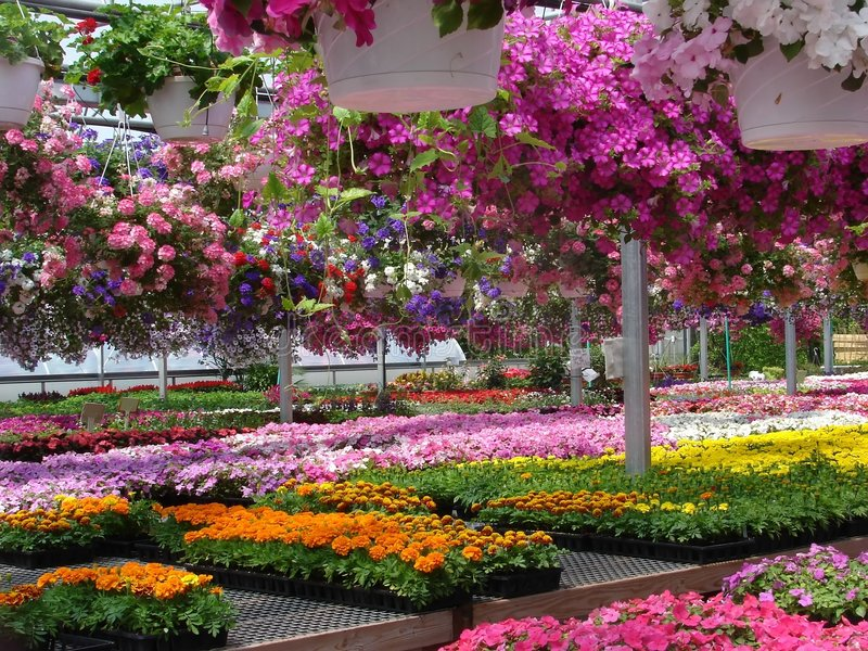 De markt van de bloem royalty-vrije stock afbeelding