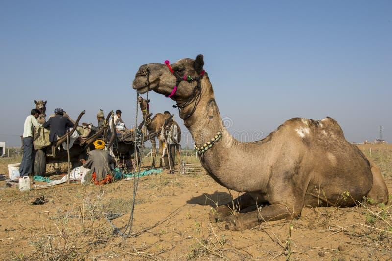 De Markt van de Pushkarkameel stock foto's