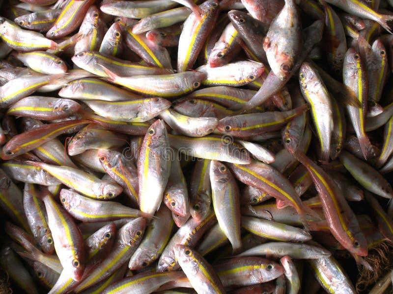 De markt van Dighavissen, overzeese vissen, India stock foto