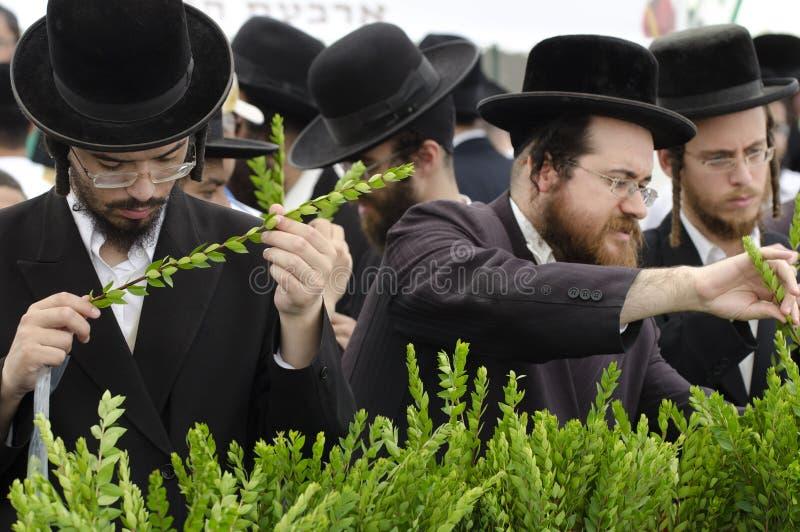 De Markt van vier Soorten voor Joodse Vakantie van Sukkot stock afbeelding