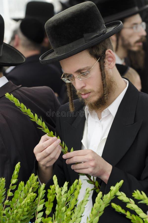 De Markt van vier Soorten voor Joodse Vakantie van Sukkot stock afbeeldingen