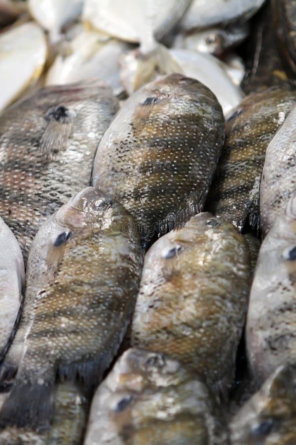 De markt van vissen stock afbeelding