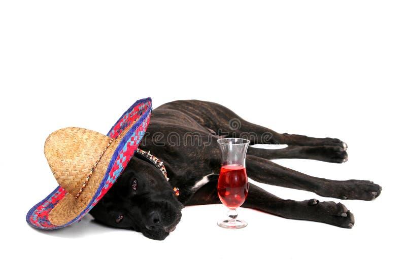 De mastiff van Partying royalty-vrije stock foto's