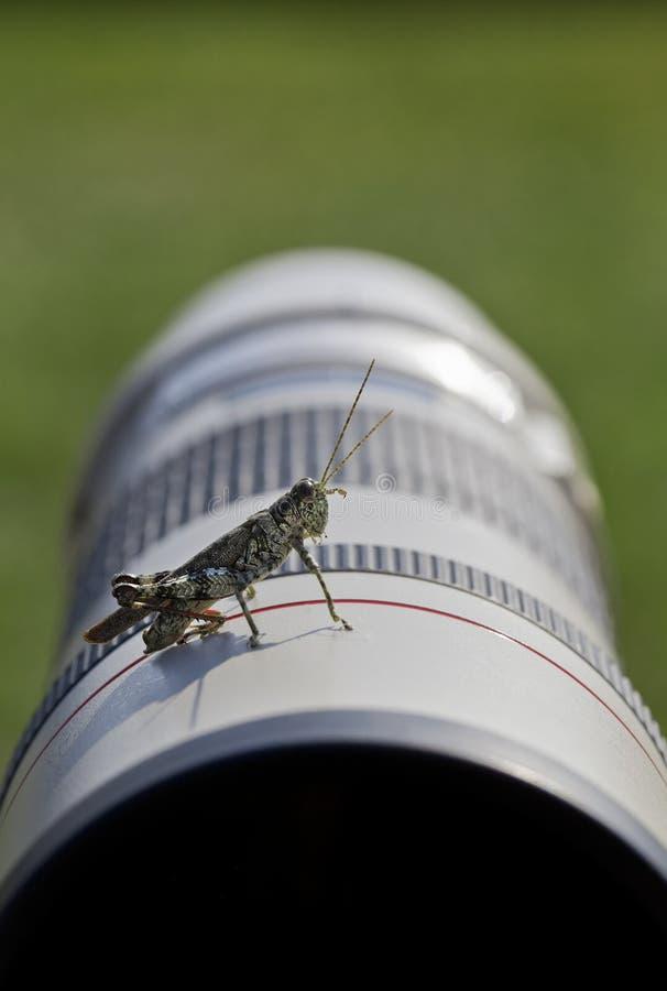 De Medewerker van de fotograaf: Sprinkhanenhulp tijdens Photoshoot royalty-vrije stock foto's