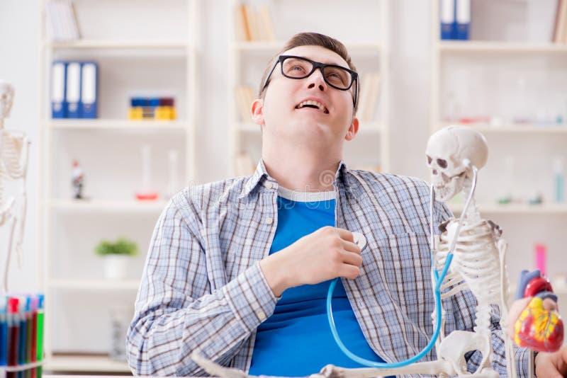 De medische student die skelet in klaslokaal bestuderen tijdens lezing stock afbeelding